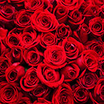 Last-minute Valentine's offers, incl �3 roses & free cocktail - MSE Coupon Kid Jordon Cox's deals of the day